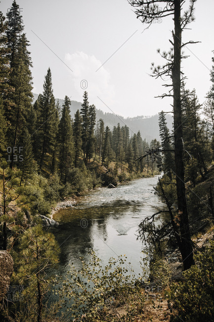 Scenic view of river flowing amidst trees against sky in forest