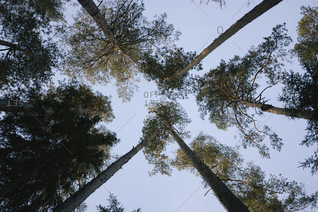 Low angle view of trees growing against clear sky in forest