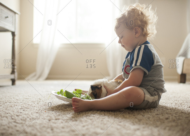 Side view of cute baby boy feeding leaves to guinea pig on carpet at home