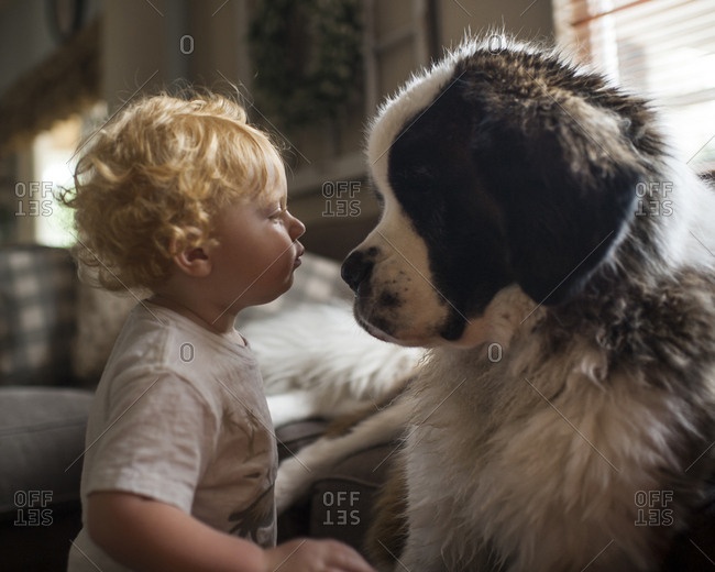 Side view of cute baby boy looking at Saint Bernard face to face in living room