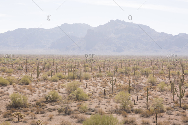 Scenic view of cactus on landscape against mountain at Organ Pipe Cactus National Monument