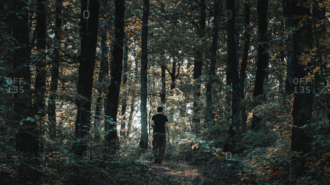 Rear view of man walking amidst trees in forest