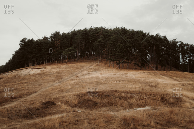 Portrait of forest atop a hill