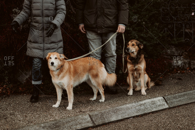 Couple walking with their dogs