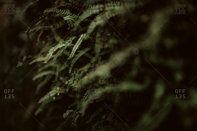 Detail of green leaves - Offset