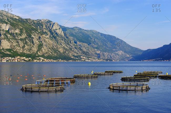 Montenegro- Bay of Kotor- mussel farm