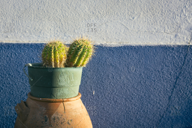 Shabby metal pot with two lovely cactus placed in ceramic vase near stucco wall of building