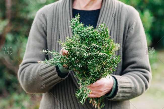 Unrecognizable female in warm jacket holding bunch of fresh rosemary while standing on blurred background of garden