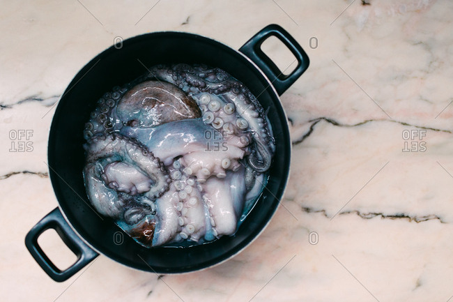 Fresh squid on marble table