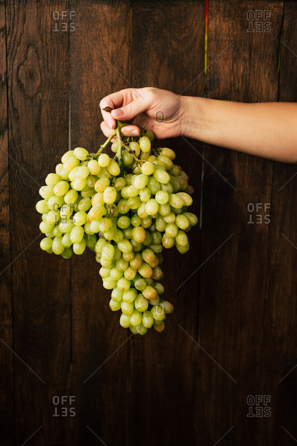 Hand of anonymous woman holding big bunch of fresh grapes near dark wooden wall