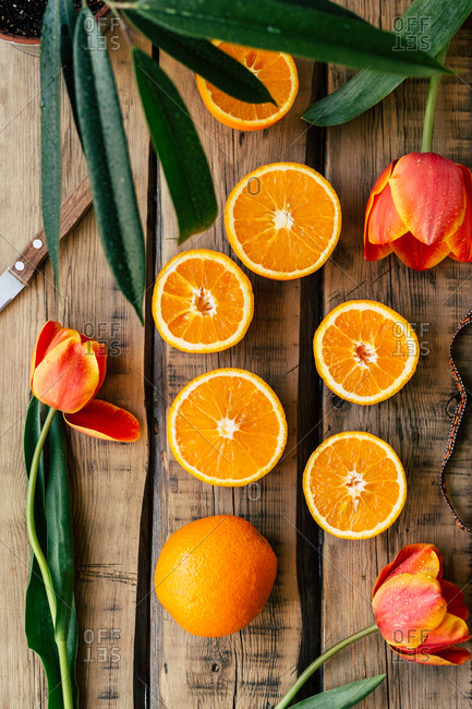From above beautiful tulips and fresh oranges lying on lumber surface near knife and potted plant