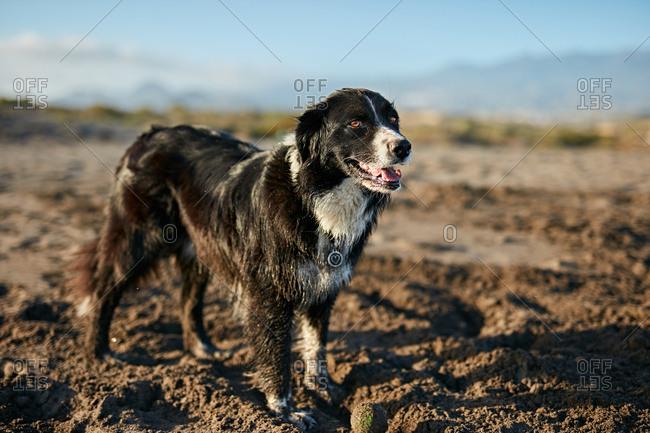 Funny dog sitting on beach