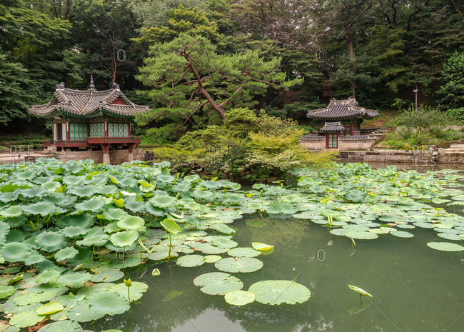 Calm pond with wonderful water lilies near small Korean pagodas in majestic park