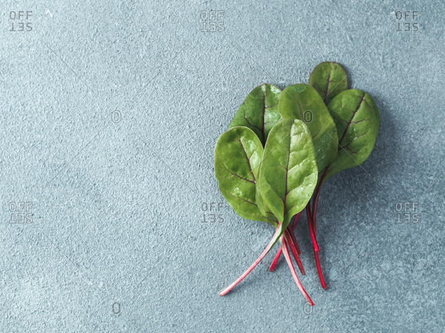 Bunch of fresh green chard leaves or mangold salad leaves on gray stone background. Flat lay or top view fresh baby beet leaves, copy space for text