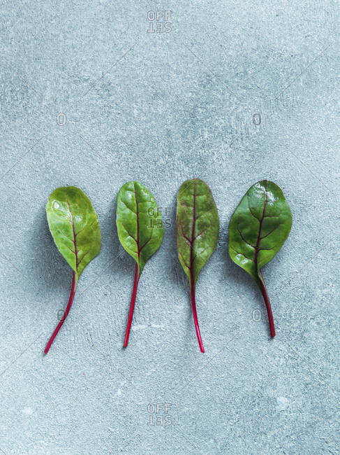 Set of four fresh green chard leaves or mangold salad leaves on gray stone background. Flat lay or top view fresh baby beet leaves. Vertical.