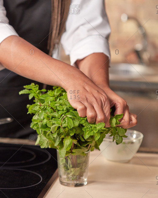 Fragrant fresh green organic mint and woman's hand tear some leaf for fresh tea at the kitchen table. Close up view. Concept preparing homemade drink.