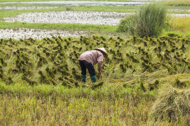 Farmer working in field in Hanoi, Vietnam