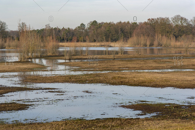 Flooded field on the edge of a forest