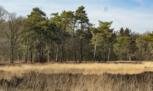 Brown field on the edge of a forest