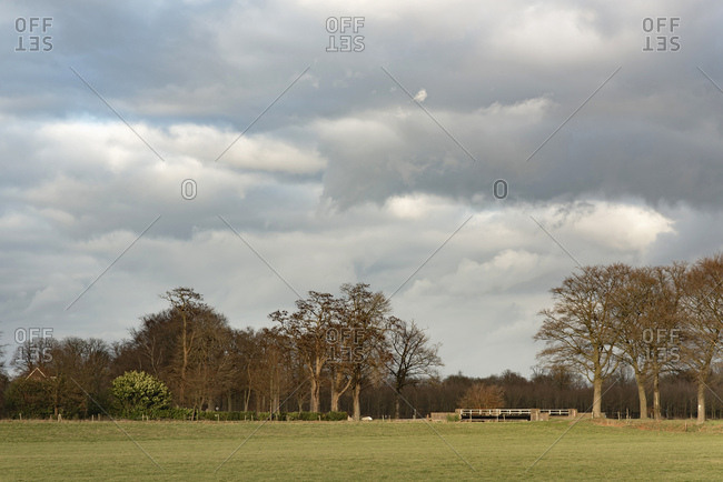 Bare trees under cloudy sky in rural landscape
