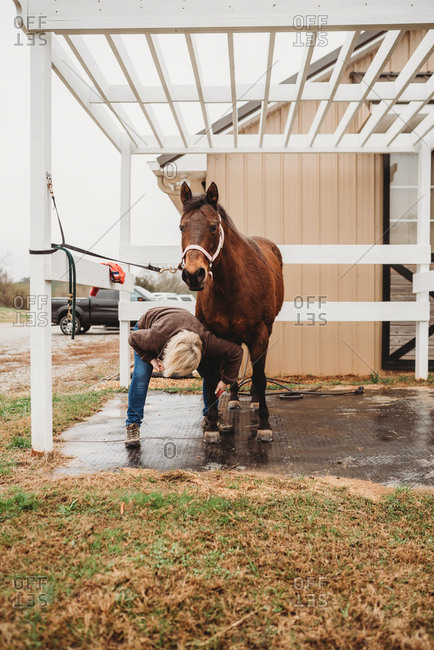 Woman washing a horse