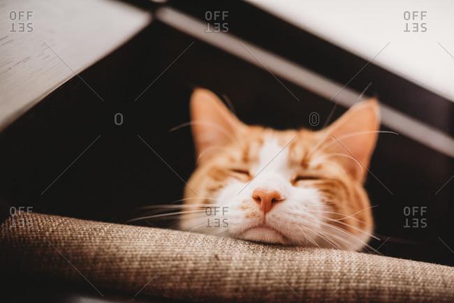 Orange cat sleeping