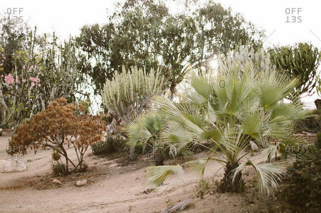 Palm tree and cacti in desert garden