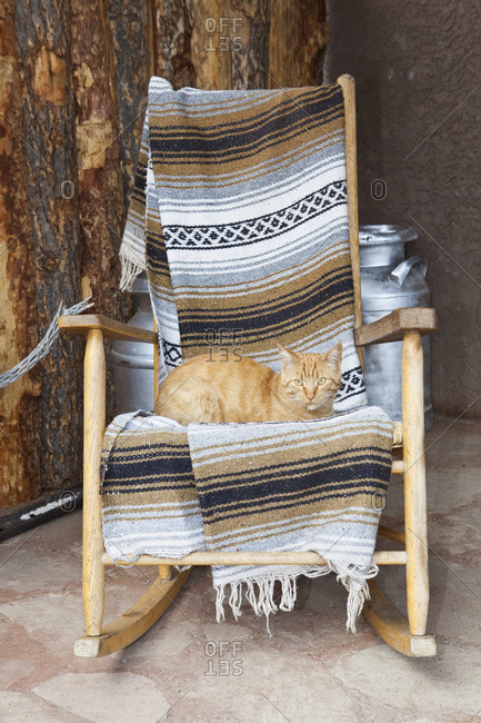 Cat on a Wooden Rocking Chair,Entrada, Colorado, USA