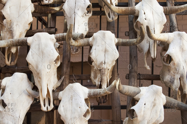 Close up of bull skulls with horns, Santa Fe, New Mexico, United States,Santa Fe, New Mexico, USA