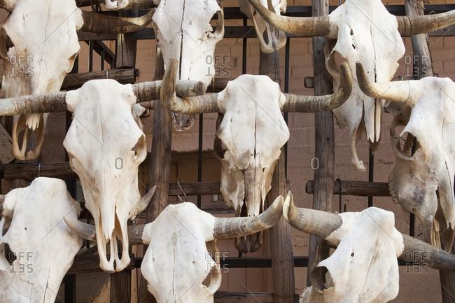 Close up of bull skulls with horns, Santa Fe, New Mexico, United States,Santa Fe, New Mexico, USA