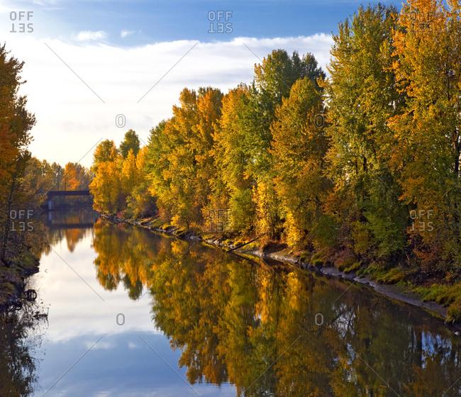 Trees Along River