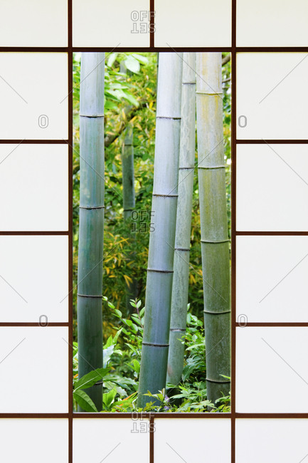 Bamboo Forest Through a Rice Paper Window
