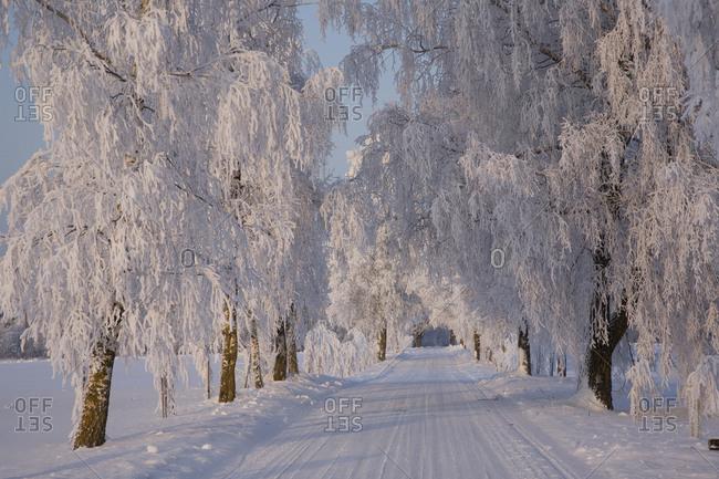 Frozen Path Through Trees