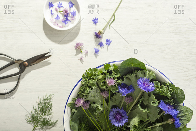 Kale, herbs and edible flowers in a colander on a white wood surface with scissors.