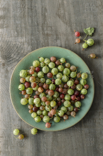 Fresh gooseberries on an aqua ceramic plate on weathered wood.