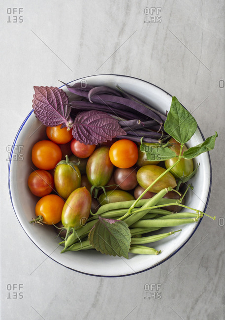 Tomatoes, bush beans and shiso freshly picked from a garden in a colander on marble.