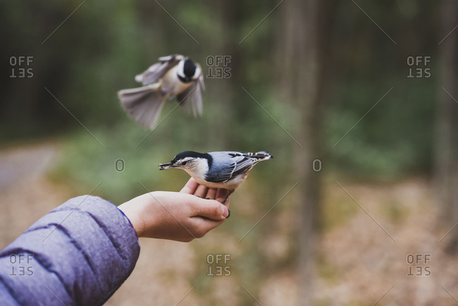 Cropped image of boy feeding birds at forest