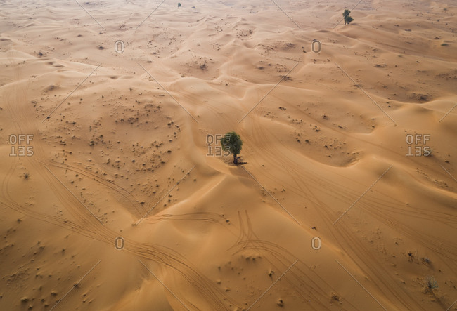 Aerial view of a single tree growing on the middle of desert, U.A.E.