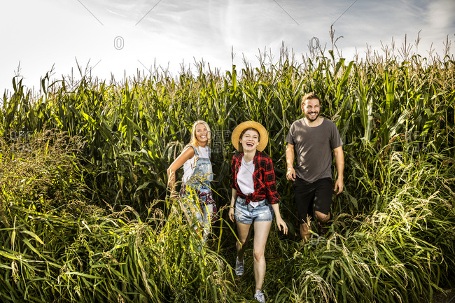 Happy friends in a cornfield