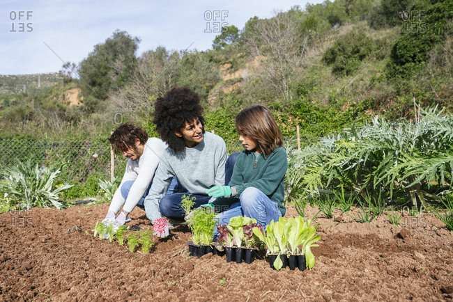 Family planting lettuce seedlings in vegetable garden