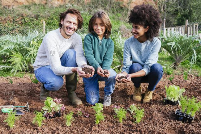 Family planting lettuce seedlings in vegetable garden- showing hands- full of soil