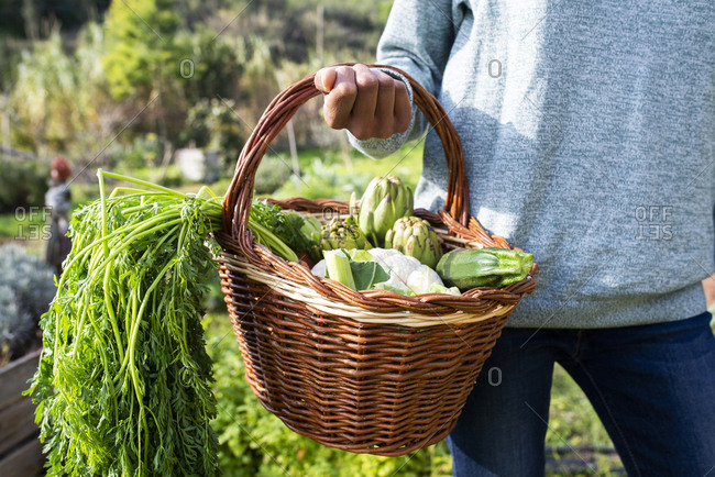 Woman standing in the field- carrying a vegetable crate