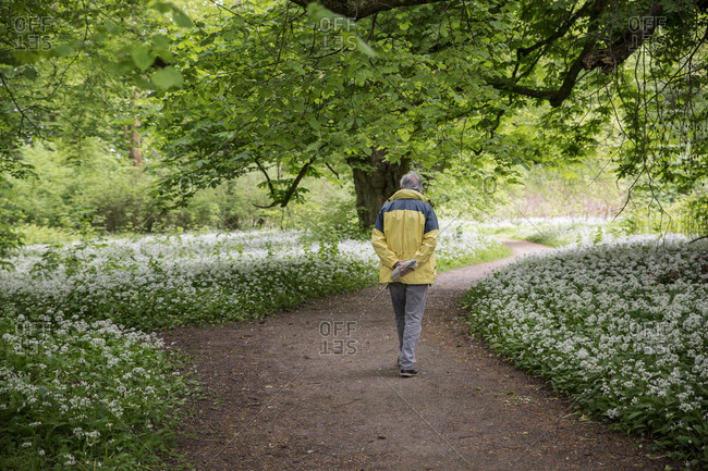 Germany- Ruegen- Putbus- man walking in park with blossoming ramson
