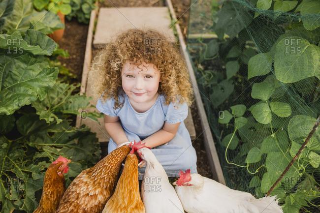 Portrait of little girl feeding chickens in allotment