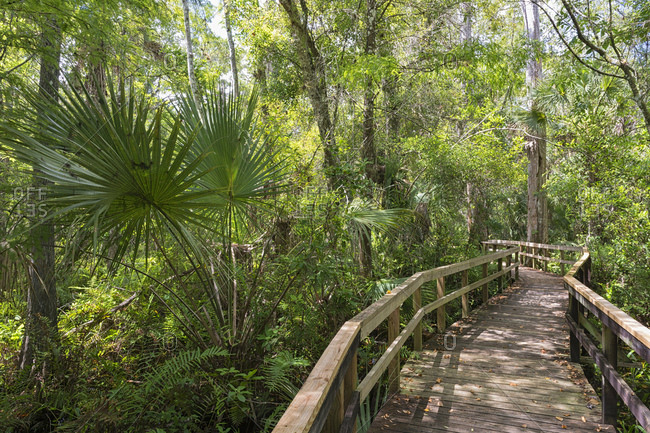 USA- Florida- Copeland- Fakahatchee Strand Preserve State Park- boardwalk through swamp