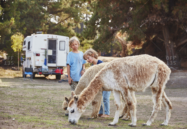 Chile- Vina del Mar- two boys stroking llamas in front of a camper in the forest