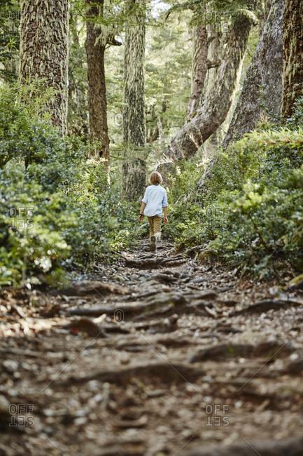 Chile- Puren- Nahuelbuta National Park- boy walking on path through forest