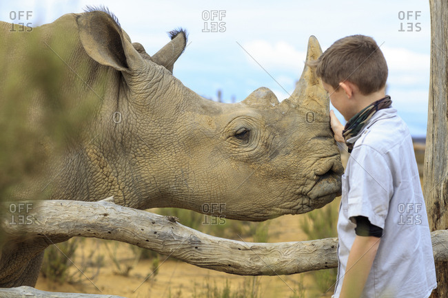 Boy stroking a baby rhino