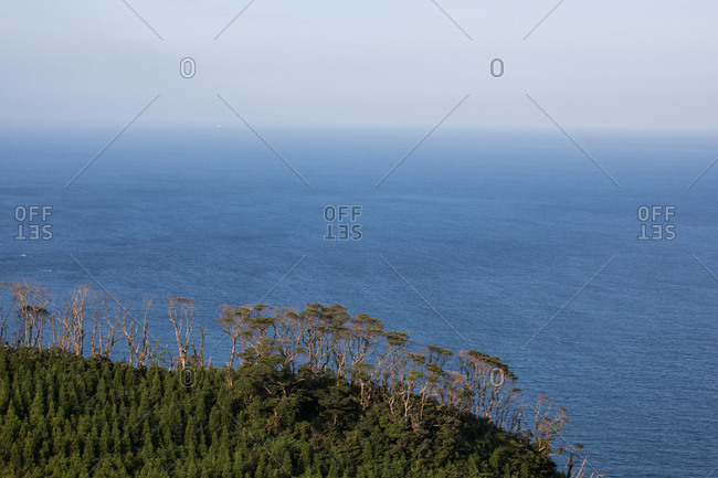 Green forest covered cliff along the ocean
