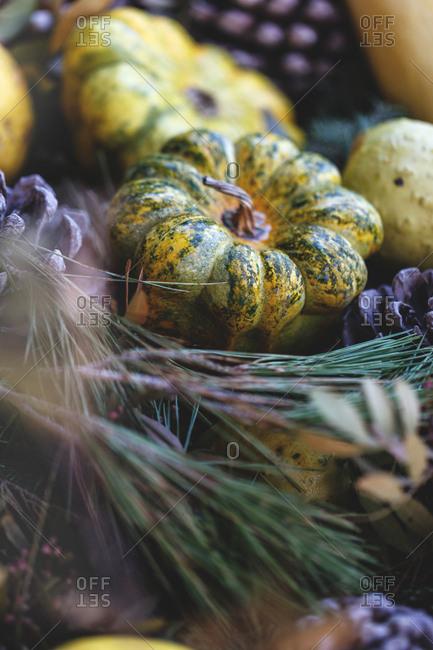 Squash and pinecones